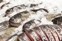 Fish on ice in a supermarket Stock Photography