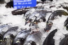 Fish on ice in a supermarket. Some fish on ice in a supermarket Stock Photos