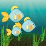 Fish icon design. Fish digital design, vector illustration 10 eps graphic Stock Photos