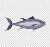 Fish Icon Design Flat. Fish sea animal or food, wildlife aquatic and nature ocean river fish, seafood life swimming with tail and fin, fauna marine style Royalty Free Stock Images