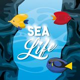 Fish icon. Sea life design. Vector graphic. Sea life concept represented by fish icon. Colorfull and flat illustration Stock Images