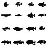 Fish icon set. The fish of icon set Royalty Free Stock Image