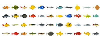 Fish icon set, flat style. Fish icon set. Flat set of fish vector icons for web design isolated on white background Royalty Free Stock Image