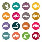 Fish icon set. Fish species  icon set Stock Photos