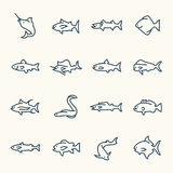 Fish icon. Fish species line icon set Royalty Free Stock Photo