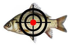 Fish icon target, spearfishing goal Royalty Free Stock Photo