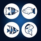 Fish icons design Royalty Free Stock Images