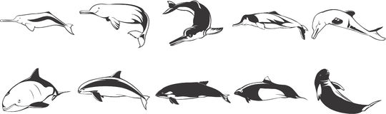 Fish icons set. Set of various fish icons on white background. Large species such as dolphins, whales, killer whales etc Stock Photo
