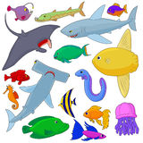 Fish Icons set, cartoon style. Fish Icons set in cartoon style  on white background Stock Photography