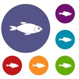 Fish icons set. In flat circle reb, blue and green color for web Stock Photos