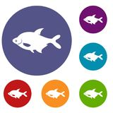 Fish icons set. In flat circle reb, blue and green color for web Stock Photo