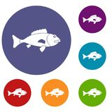 Fish icons set. In flat circle reb, blue and green color for web Stock Image