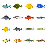 Fish icons set, flat style Stock Photography