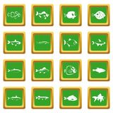 Fish icons set green. Fish icons set in green color isolated vector illustration for web and any design Stock Photography