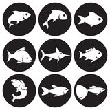 Fish icons set Stock Photos