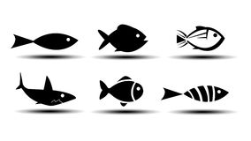 Fish Icons. On white background Stock Photography