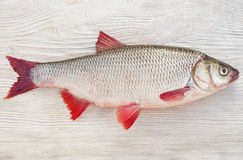 Fish a ide. On a natural background Royalty Free Stock Photo