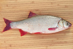 Fish a ide. On a natural background Royalty Free Stock Photos