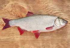 Fish a ide. On a natural background Royalty Free Stock Images