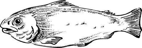 Fish illustration. An original pen and ink illustration, drawn in a vintage style of a kipper (fish Royalty Free Stock Photo