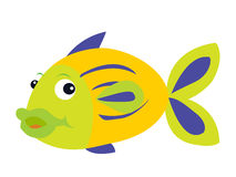 Fish illustration Royalty Free Stock Images