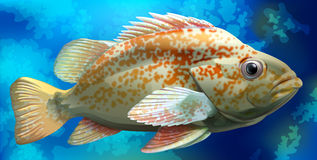 Fish. Illustration of a close up fish Stock Images