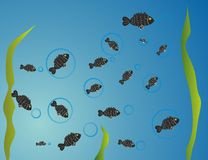 Fish illustration. Vector illustration of a fishes Stock Images