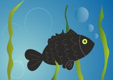 Fish illustration. Vector illustration of a fishes Royalty Free Stock Images