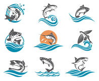 Fish illustrations set Royalty Free Stock Photography