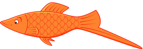 Fish. Image of orange platy on isolated background Royalty Free Stock Photos