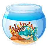 A fish inside the aquarium. Illustration of a fish inside the aquarium on a white background Royalty Free Stock Photography