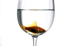 Fish inside a cup Royalty Free Stock Images