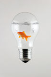 Fish inside the Light Bulb. The Fish inside the Light Bulb Stock Image