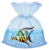 A fish inside the plastic container. Illustration of a fish inside the plastic container on a white background Stock Photo