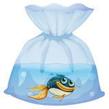A fish inside a plastic pouch. Illustration of a fish inside a plastic pouch on a white background Stock Images