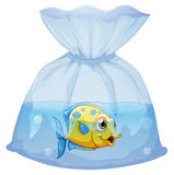 A fish inside the plastic pouch Royalty Free Stock Image