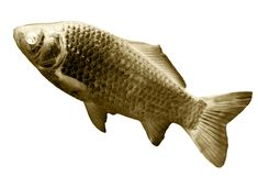 Fish in the inversion on a white background. Photos in the studio Stock Images