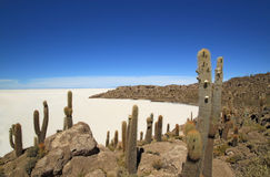 Fish island in Uyuni Salt Flats, Bolivia Royalty Free Stock Photos