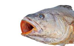Fish Isolated Stock Image