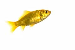 Free Fish, Isolated Over White Stock Image - 5086991