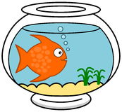 A fish in its aquarium Royalty Free Stock Photo