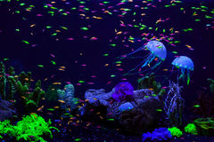 Fish and jellyfish in the aquarium. Royalty Free Stock Photos