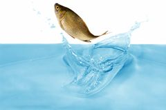 Fish in jump Stock Images