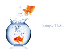 Fish jumping Royalty Free Stock Photography