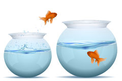Fish jumping from one tank to another. Illustration of jumping fish in tank on white background Stock Image