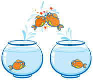 Fish jumping out of the water and crash. Goldfish jumping out of the water and crash Royalty Free Stock Photography
