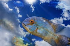 Fish jumping out of water. Creative freedom concept. Free spirit, blue sky swiming stock image
