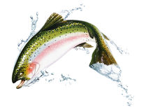 Fish jumping out of the water, with some splashes. Photorealistic airbrush illustration, on white background. Clipping path included Royalty Free Stock Photos