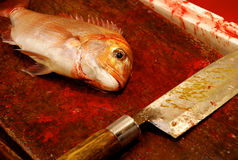 A fish and a knife. At the Tsukiji Fish Market in Tokyo. The best fishes are chosen to prepare the best sushi ever Royalty Free Stock Image