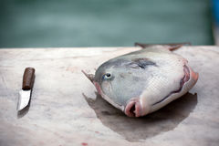 Fish and a knife. Closeup of fresh sea fish and a knife lying on market table Stock Images